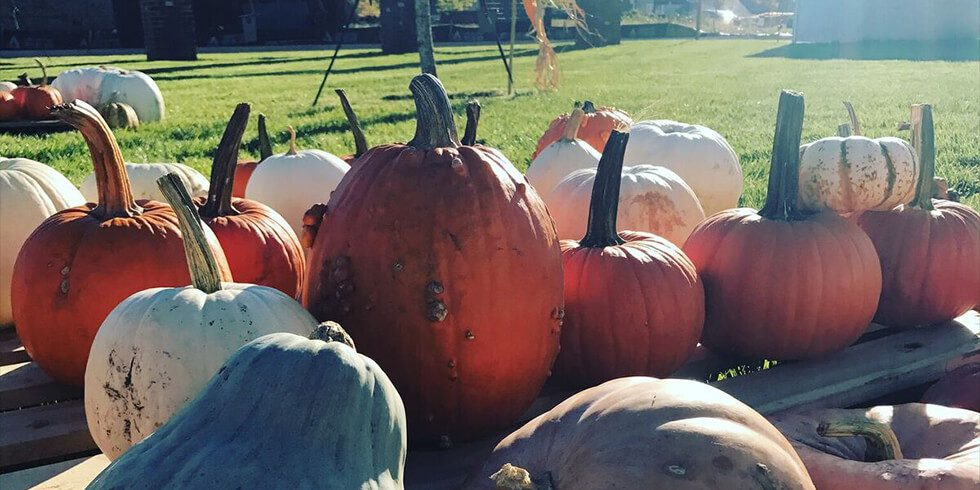 Durham Farms Harvest Fest | Oct. 28, 2017